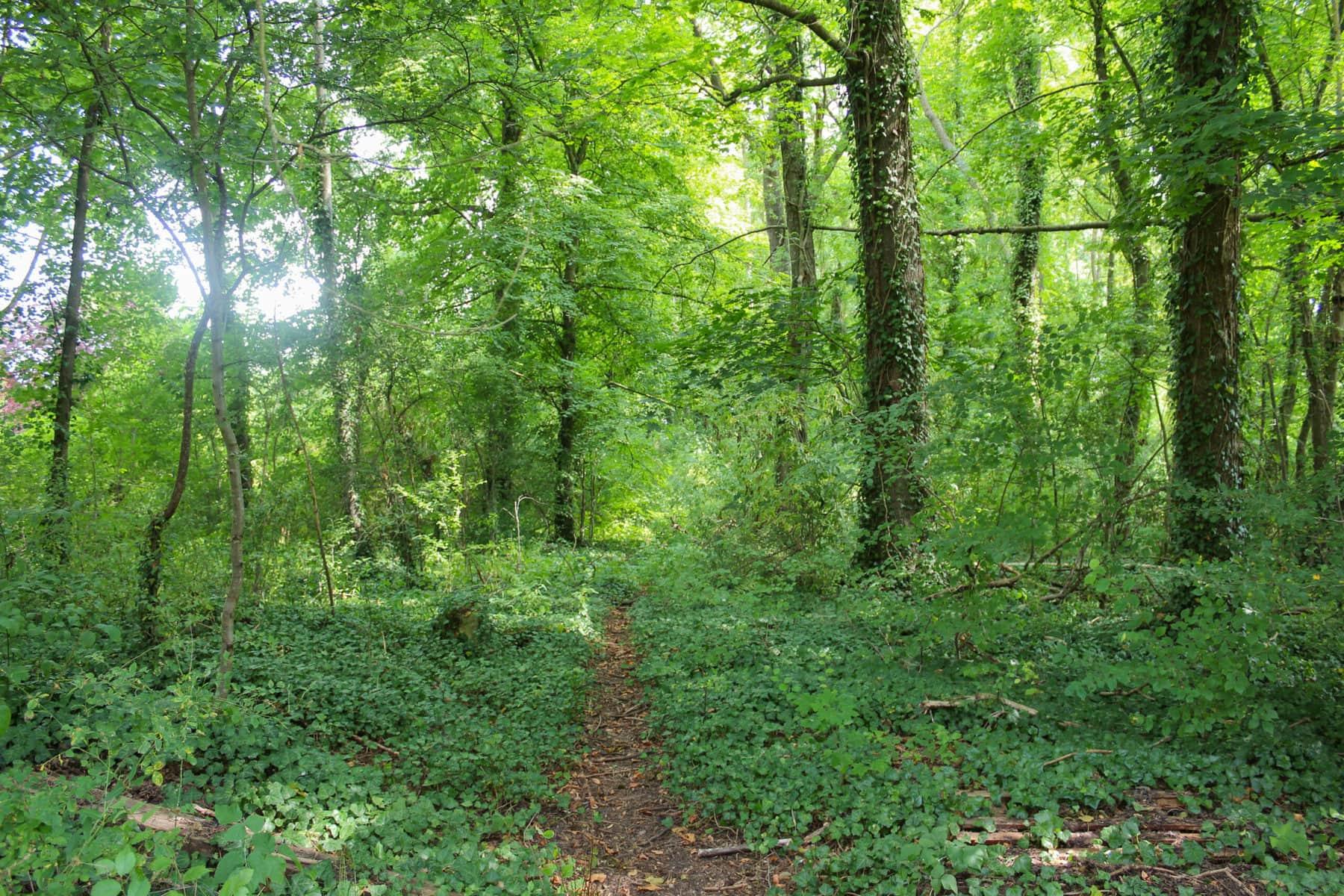Wald bei Damvillers