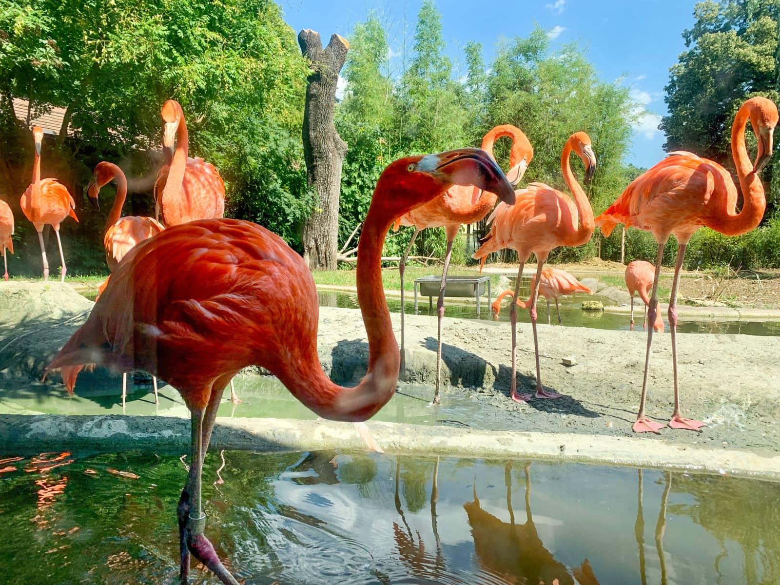 Tiergarten Schönbrunn, Zoo, Wien