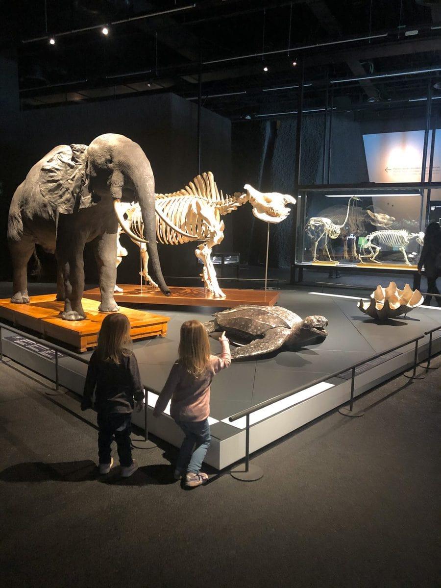 Museum Blau Barcelona mit Kindern