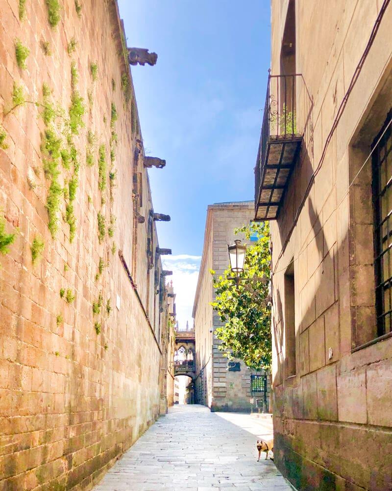 Kathedrale Barcelona während Corona 2020